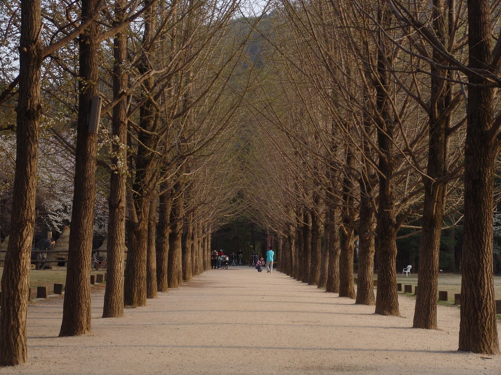 Nami-Island-Korea-Winter-Sonata-3