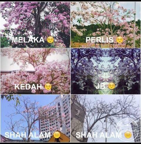 musim-bunga-Malaysia-2014