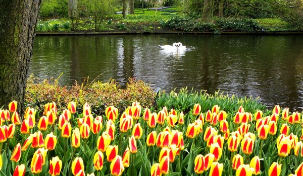 4_the-netherlands-tulips